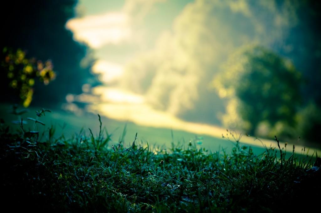 Grass Halm